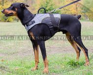 Dog Harness Vest for Doberman, Mobility and Support Nylon Jacket