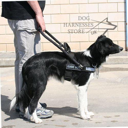 dog wearing guide hanress
