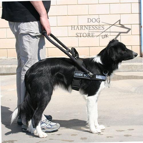 Staffordshire Terrier Pitbull Dog Harness Leash