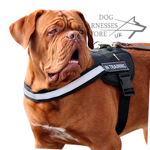 Dogue de Bordeaux Tracking Harness
