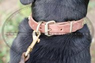 Elegant Dog Collar with Square Studs for Swiss Mountain Dog