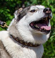 Elegant Dog Collar 1 Inch with Square Brass Studs for Husky
