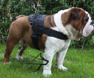 Old English Bulldog Harness UK, Nylon Multifunctional Style