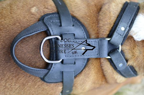 English Bulldog Harness for Sale