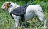 Bulldog Harness UK for Daily Activities and Sport