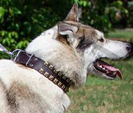 Dog Collar for West Siberian Laika with Brass Studs, Caterpillar