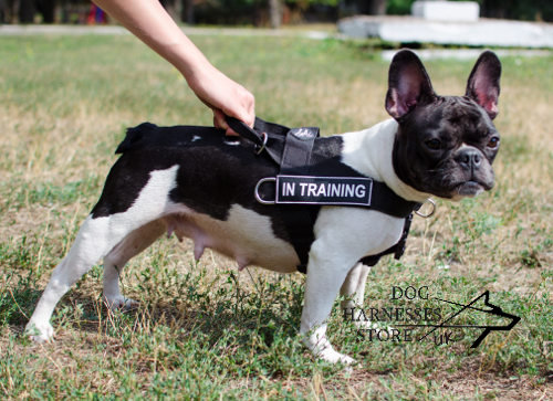 Dog Harness for French Bulldog