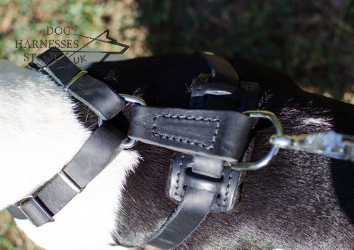 French Bulldog Harness for Sale UK