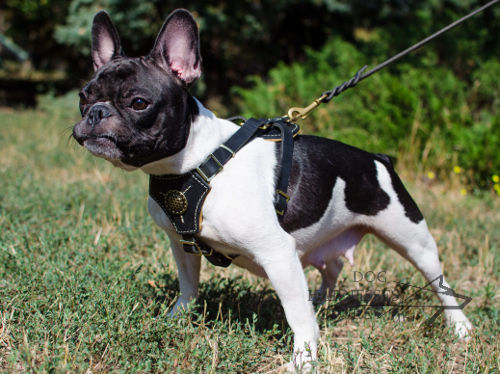 Royal Dog Harness