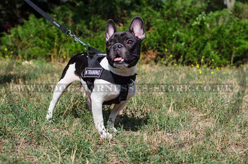 French Bulldog Harnesses UK