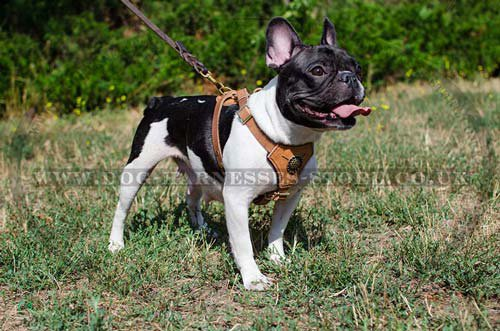 Small Dog Harness UK
