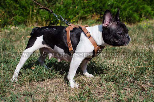 Dog Harness for French Bulldog UK