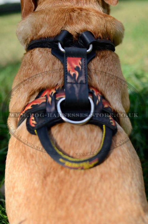 Golden Retriever Harness UK