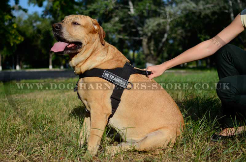 Golden Retriever Harnesses UK
