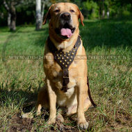 Studded Dog Harness of Genuine Leather for Golden Retriever