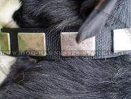 Swiss Mountain Dog Collars - Strong Nylon with Buckle and Plates