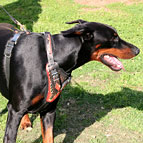 "Hand Painted Leather Dog Harness for Doberman with ""Flame"" Decor"