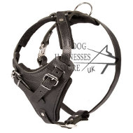 Leather Dog Harness with Handle UK for Protection Dogs!