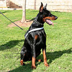 Doberman Harness of Nylon, Reflective with ID Patches UK