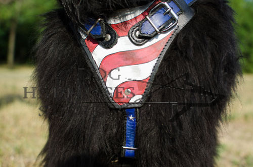 Handmade Dog Harness for Newfoundland in USA Style