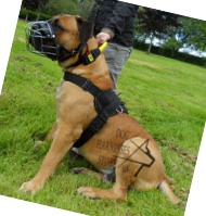 Walking Harness UK for Mastiffs, best Suit and Comfort!