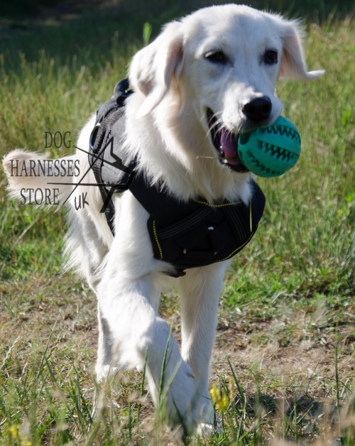 Labrador Harnesses UK