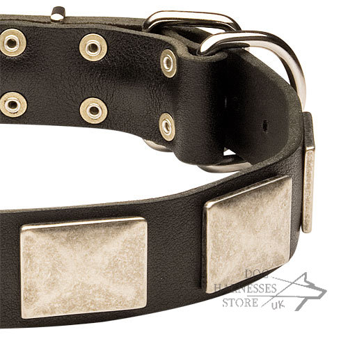 Dog Accessories UK for Doberman
