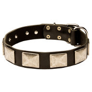 Large Dog Collar of Strong and Soft Leather with Nickel Plates