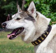 Large Leather Collar for West Siberian Laika with Brass Plates