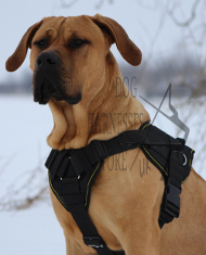 Large Dog Harness UK | Dogo Canario Harnesses