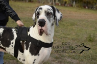 Large Nylon Harness for Great Dane, Suitable for Any Weather