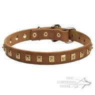 Leather Dog Collar with Square Brass Studs UK, Elegant Design
