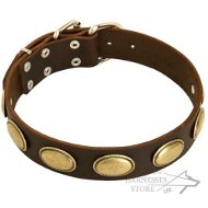 Leather Dog Collar in Retro Style with Oval Brass Plates
