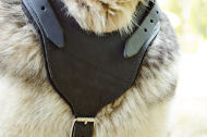 Protection Dog Harness of Leather with Padded Chest for Husky