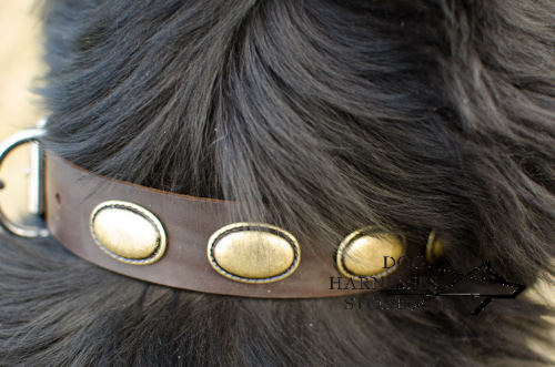 Newfoundland Dog Collar