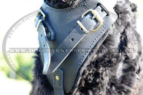 Black Russian Terrier Harnesses
