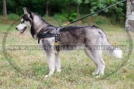 Leather Harness for Husky Pulling and Tracking UK