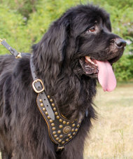 Royal Studded Dog Harness for Newfoundland with Nappa Lining