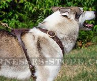 Handmade Dog Harness of Two-Ply Leather for West Siberian Laika