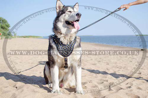 Husky Harnesses UK