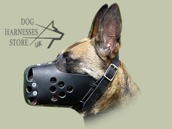 Malinois in Leather Dog Muzzle