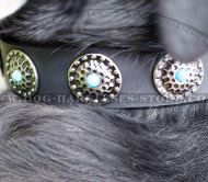 Modern Dog Collar with Blue Stones for Swiss Mountain Dog