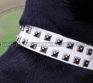 NEW Limited Edition Doberman Collar, White Leather!