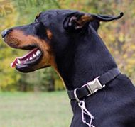 Adjustable Dog Collar with Quick-Release Buckle for Doberman