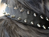 Nylon Dog Collar with 2 Rows of Spikes for Newfoundland