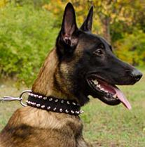 Nylon Dog Collar with 2 Rows of Spikes for Belgian Malinois