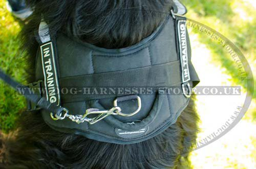 Newfoundland Harness for Tracking and Schutzhund