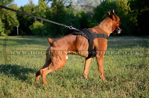 German Boxer Harnesses UK