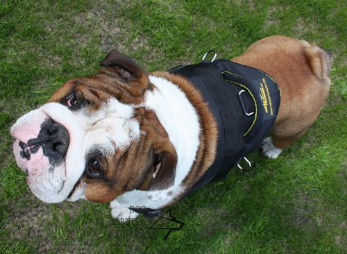 Super Strong Dog Harness for Bulldog Training