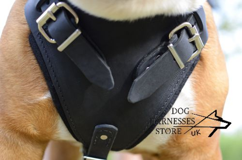 British Bulldog Harnesses UK